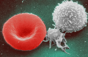 Red_White_Blood_cells